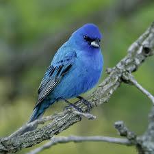 La magie de l'oiseau bleu : gazouiller sur une branche ou brancher les gazouillis?  (1/2)